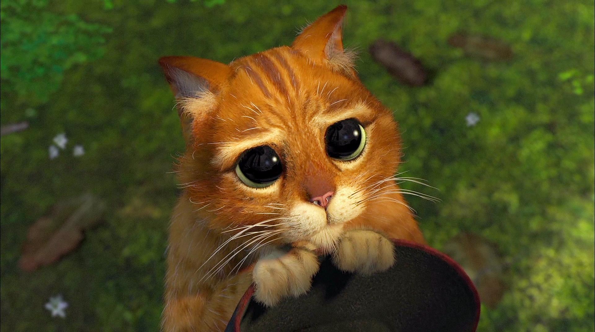 sorrycat